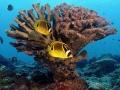 corail_cc100
