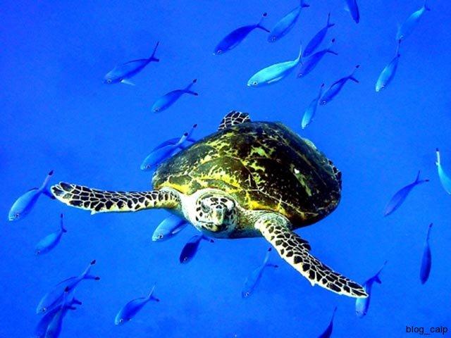 tortues-de-mer